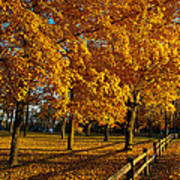 Autumn Fence Art Print