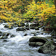 Autumn Stream 3 Art Print
