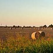 Bales In Peanut Field 2 Art Print by Douglas Barnett
