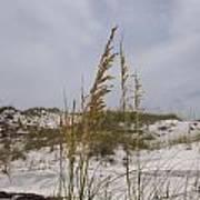 Beach Sand Dunes Art Print
