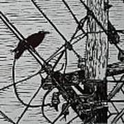 Bird On A Wire Art Print by William Cauthern