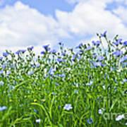 Blooming Flax Field Art Print by Elena Elisseeva