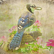 Blue Jay With Texture II Art Print