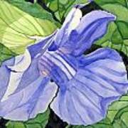 Blue Sky Vine Art Print