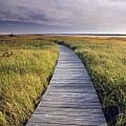 Boardwalk Along The Salt Marsh Art Print
