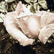 Bring May Flowers Art Print
