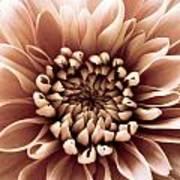 Brown Flower Art Print