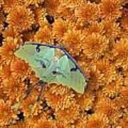 Butterfly On Flowers Art Print