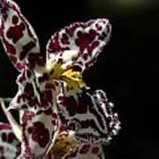 C Ribet Orchids Art Print