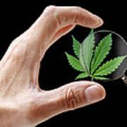 Cannabis Research Art Print by Victor De Schwanberg