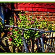 Cape Cod Bike Art Print