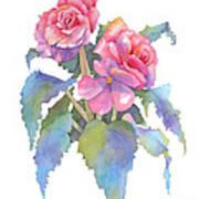 Carmel Begonias Art Print