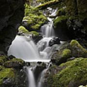 Cascading Creek In Temperate Rainforest Art Print