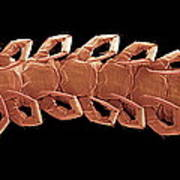 Centipede Underside, Sem Art Print by Steve Gschmeissner