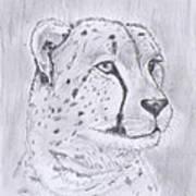 Cheeta Watching Art Print