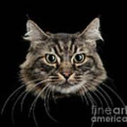 Close Up Of Cats Face Art Print
