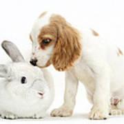 Cocker Spaniel And Rabbit Art Print