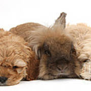 Cockerpoo Puppies And Rabbit Art Print