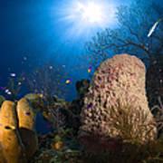 Coral And Sponge Reef, Belize Art Print