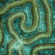 Coral Design Art Print