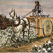 Cotton Harvester, 1886 Art Print