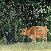 Cow In Pasture Art Print