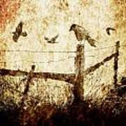 Crows And The Corner Fence Art Print