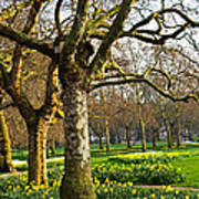 Daffodils In St. James's Park Art Print by Elena Elisseeva