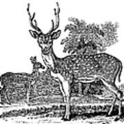 Deer Art Print by Granger