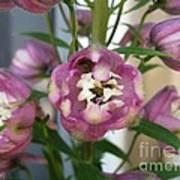 Delphinium Named Magic Fountains Lilac Pink Art Print