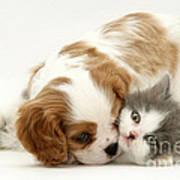 Dog And Cat Art Print by Jane Burton