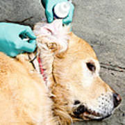 Dog Grooming Art Print