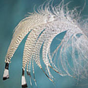Droopy Feather Art Print
