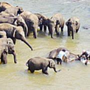 Elephant Bath Art Print