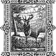 Elk From Glass Art Print