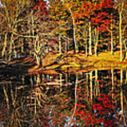 Fall Forest Reflections Art Print by Elena Elisseeva