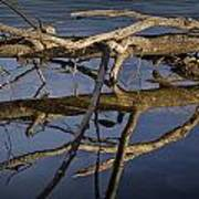 Fallen Tree Trunk With Reflections On The Muskegon River Art Print