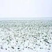 Field In Winter Art Print