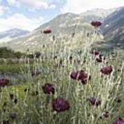Field Of Flowers In Rural Landscape Art Print