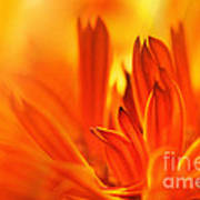 Fire Storm  Art Print by Elaine Manley