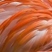 Flamingo Feathers Art Print
