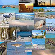 Florida Collage Art Print