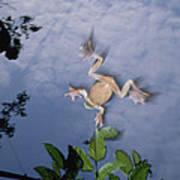 Foam Nest Tree Frog Polypedates Dennysi Art Print by Mark Moffett