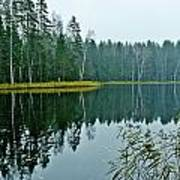 Forest Lake Art Print