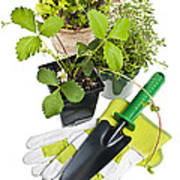 Gardening Tools And Plants Art Print