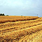Golden Harvest Field 1 Art Print