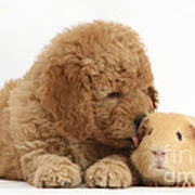 Goldendoodle Puppy And Guinea Pig Art Print