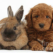 Goldendoodle Puppy And Rabbit Art Print