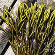 Green Fleece Seaweed Art Print