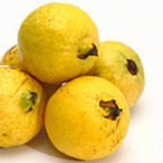 Guava Fruits Art Print